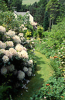 informal path through large country garden with rhododendron