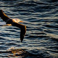 © 2012 cedricfavero.com - All rights reserved