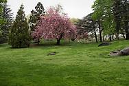 Cedar Hill in Central Park