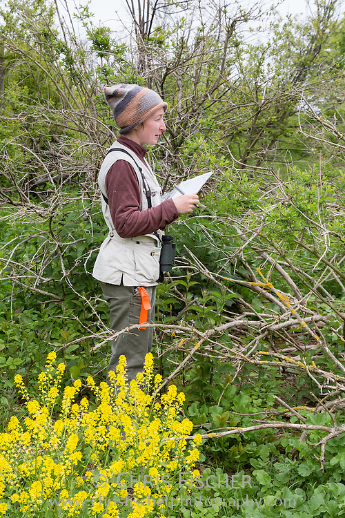 Biologist Emily Pollom records data during a wading bird census on Stratton Island, Maine. As the team makes its way through the wading bird colony, each nest is identified and the number of eggs and/or chicks in each is counted.