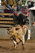 """061909-Evergreen, Colo.-fridaynightbulls-Cody McFadden goes head over heels while riding a bull named Ludacris during the 2009 Evergreen Rodeo """"Friday Night Bulls"""" Pro Bull Riding Friday, June 19, 2009 at The Evergreen Rodeo Grounds..Photo By Matthew Jonas/Evergreen Newspapers/Photo Editor"""