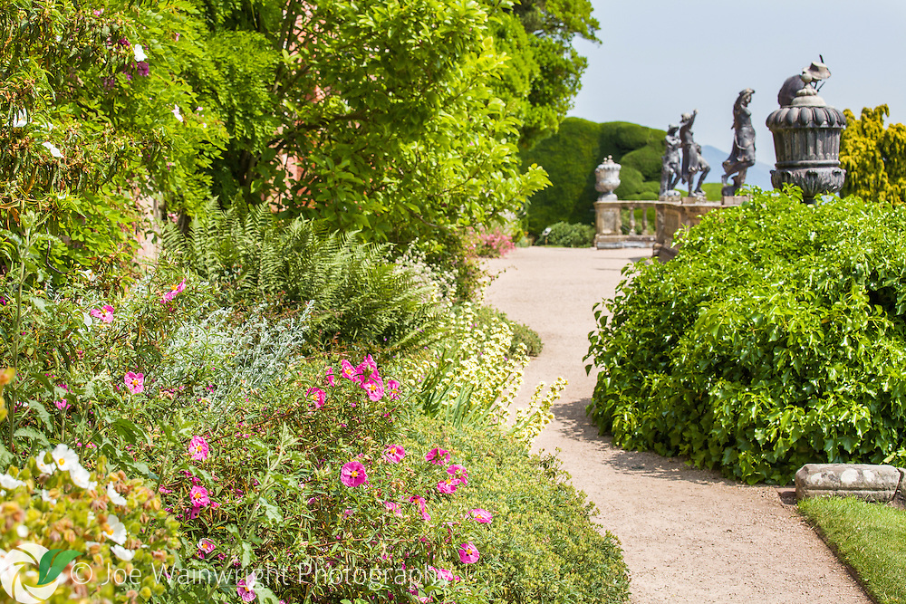Helianthemums line the path on the Aviery terrace at Powis Castle, Welshpool, Mid Wales.  Photographed in July.