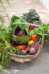 Wooden trug full of vegetable harvest including cabbage, chard, lettuce, peppers, carrots and beetroot
