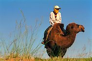 Mongolei, MNG, 2003: Kamel (Camelus bactrianus). Zufälliges Zusammentreffen mit einer jungen Frau, die auf einem Kamel durch die südliche Wüste Gobi reitet. Sie trägt westliche Kleidung und eine gelbe Gesichtsmaske als Sonnenschutz, damit ihr Gesicht nicht so verbrannt wird wie das ihrer Eltern und Großeltern. | Mongolia, MNG, 2003: Camel, Camelus bactrianus, meeting by chance of a young women riding on a camel through the South Gobi, wearing western cloth and a yellow face mask that the sun is not burning her skin that dark like her parents or grandparents have, South Gobi. |