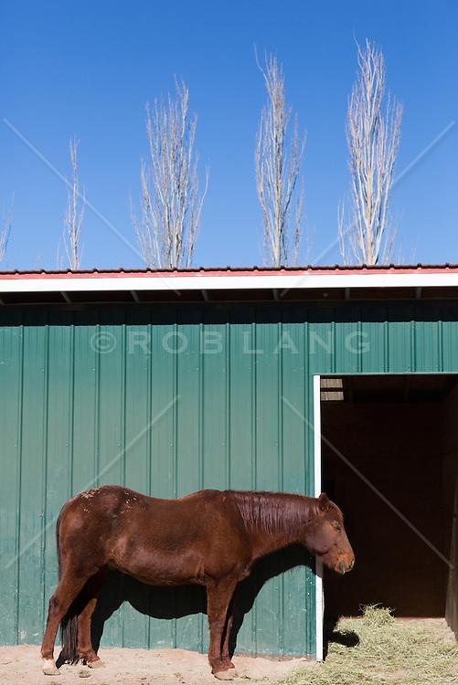 horse by a barn in Santa Fe, NM