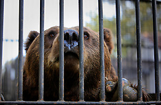 Romania Bear Rescue