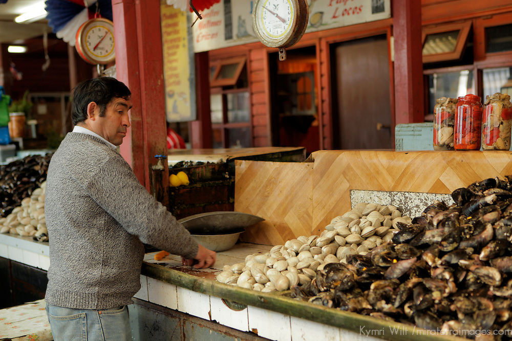 South America, Chile, Puerto Montt. Fresh Clams and Cockles.