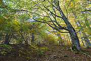 Forest in Central Balkan autumn time