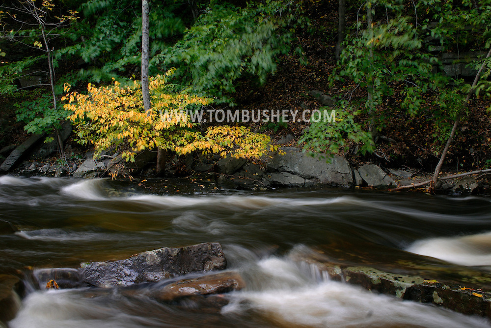 The Shawangunk Kill stream flows past a tree with yellow leaves on an autumn afternoon in the Town Mount Hope on Oct. 15, 2005.