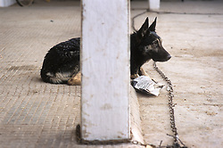 Stray dog waits to be seen by vets at SPANA Marrakech, Morocco.