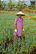 Woman at sawah rice field at the foot of the Preanger highlands of Bandung, West Java