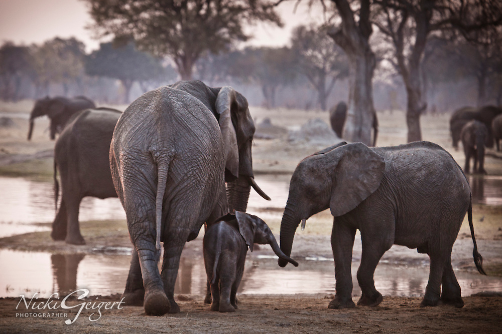 Animals, elephant family with baby.<br />