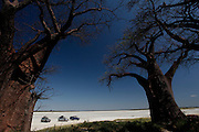 Tourists in 4x4's view Baines Baobabs at Nxai National Park, Makgadikgadi...Botswana, Southern Africa..© Zute & Demelza Lightfoot.www.lightfootphoto.com..