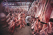 The Harris Ranch slaughterhouse, the Harris Beef Company, in Selma, California kills more than 700 head of cattle a day. Beef carcasses are cooled in a large refrigerated room. San Joaquin Valley, California. USA .[[From the company: THE HARRIS FARMS GROUP OF COMPANIES. Harris Farms, Inc. is one of the nation's largest, vertically integrated family owned agribusinesses]].