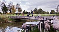 NUMANSDORP - Inktzwam . Op hole 7 Golfclub Cromstrijen. COPYRIGHT KOEN SUYK