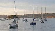 Boats in Rose Bay near Sydney.