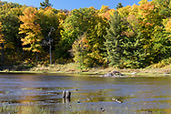 Fall foliage and the shoreline of Lac Bourgeois at Gatineau Park in Chesea, Québec, Canada. Beaver activity is said to frequently change the water levels here depending on the year - note the beaver lodge in the background.