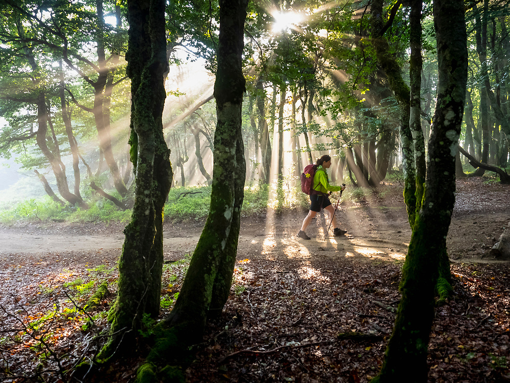 Women hiking through forest in sunlight beam at Hohneck, Vosges, France