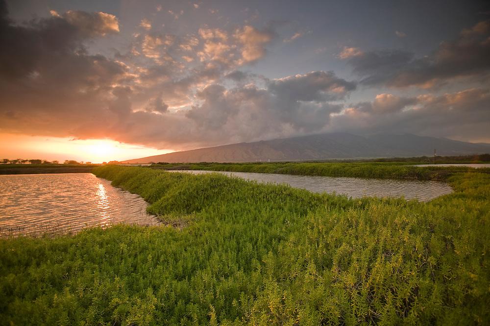Kealia Pond sunset