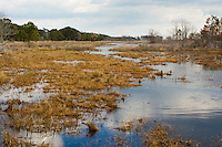Chincoteague National Wildlife Refuge, Virginia, USA