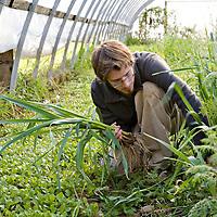 The spring garlic harvest at Plan B Organic Farms in Ontario, Canada.