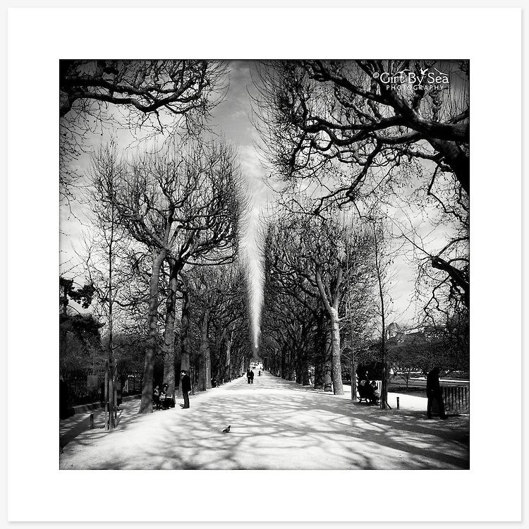 Jardin des Plantes, Paris, France - Monochrome version. Inkjet pigment print on Canson Infinity Rag Photographique 310gsm 100% cotton museum grade Fine Art and photo paper.<br />