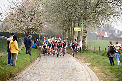 The peloton approach through the trees at Ronde van Vlaanderen - Elite Women 2019, a 159.2 km road race starting and finishing in Oudenaarde, Belgium on April 7, 2019. Photo by Sean Robinson/velofocus.com