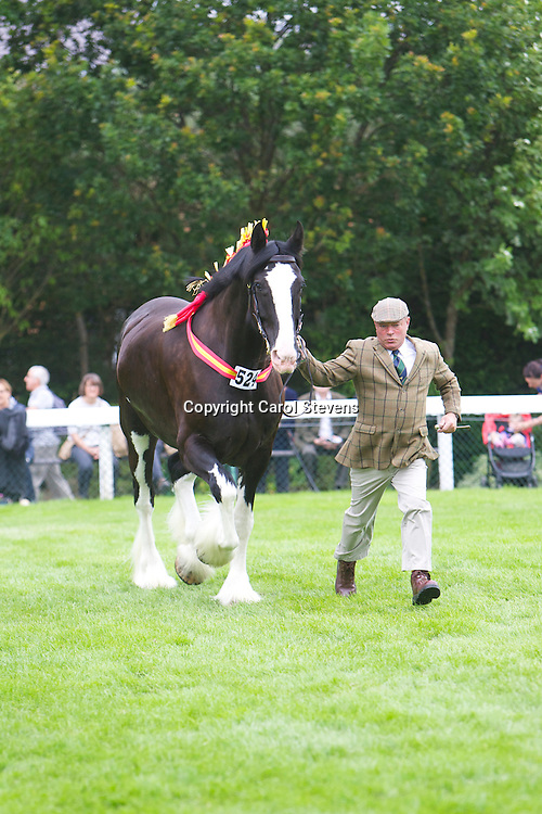 Great Yorkshire Show 2015 Shire Horse Breed Classes