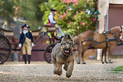 Ron Carnegie as George Washington with his dog Liberty at Colonial Williamsburg.