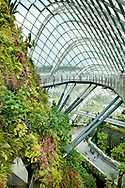 The 35-metre tall Planted Walls and aerial walkway in the Cloud Forest, Gardens by the Bay, Singapore<br /> <br /> <br /> photography &copy; Andrea Jones/Garden Exposures Photo Library
