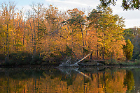 Fall scenery in along Harness Creek in  Quiet Waters Park near Annapolis, Maryland.