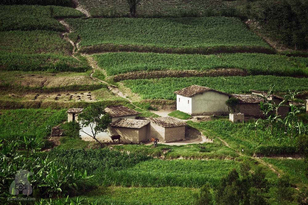Terraced plantation in Rugobagoba near Gitarama, Rwanda