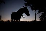 Ibiai_MG, Brasil...Silhueta de um burro em Ibiai, Minas Gerais...Donkey silhouette in Ibiai, Minas Gerais...Foto: LEO DRUMOND /  NITRO