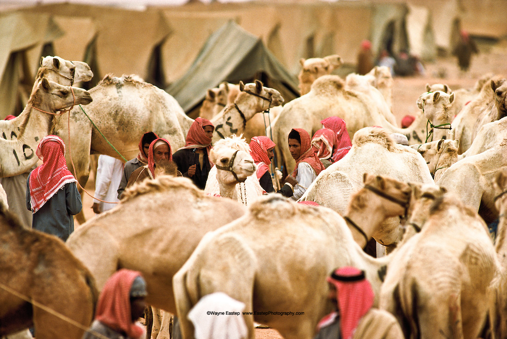 Camel Market held at the Annual Camel Race in Jinayderiah, Saudi Arabia