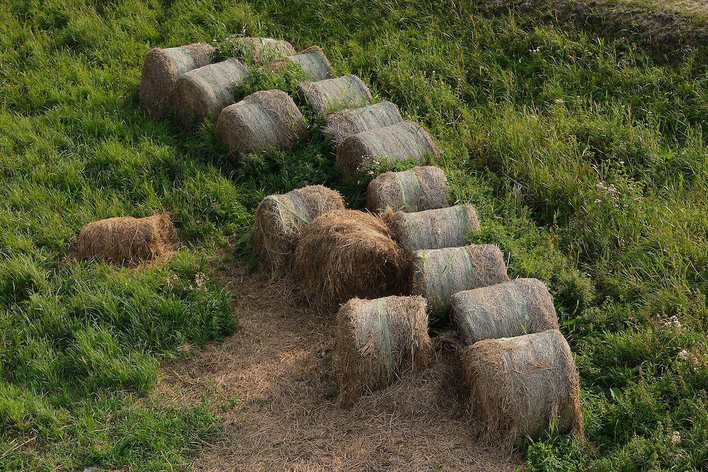 "Rotting hay, harvested only for EU subsidies in the in the private reserve ""Odra Delta Natury Park, owned by Dr Rabski, near Kopice, Poland, Oder river delta/Odra river rewilding area, Stettiner Haff, on the border between Germany and Poland"