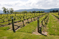 New Zealand, South Island, Marlborough, winery touring and tasting of Cloudy Bay Winery  Sauvignon Blanc and Pinot Noir wine. Photo copyright Lee Foster. Photo #126273