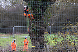 Harefield, UK. 18 February, 2020. HS2 workers survey a large tree at a site which has been fenced off in the Colne Valley for the HS2 high-speed rail link.