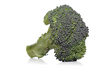 Broccoli on white backhround - studio shot