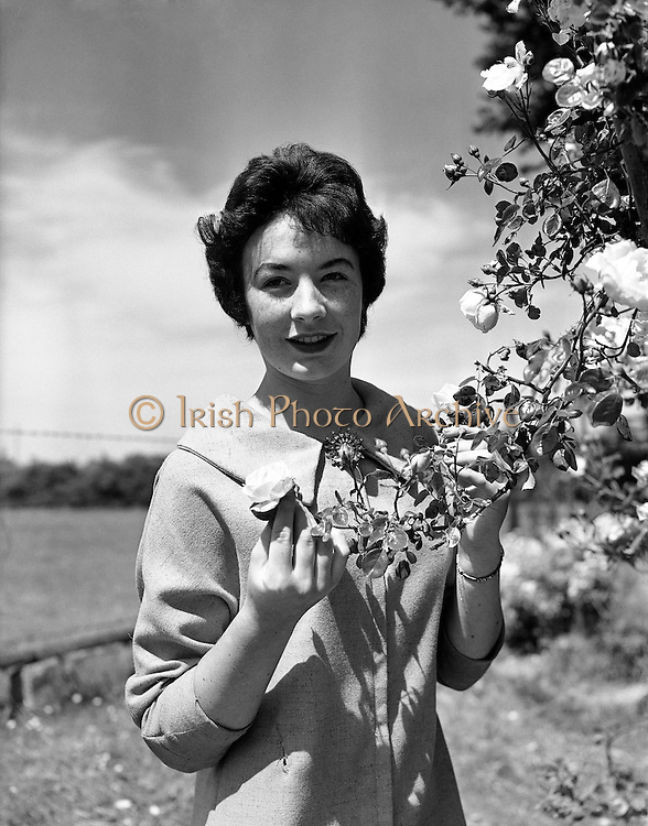 """Alice O'Sullivan, Dublin Rose, Winner of Rose of Tralee at Trimlestown Gardens, Booterstown.20/06/1959 ..Alice O'Sullivan is the first ever winner of The Rose of Tralee, having been crowned in 1959. In 2009, she was one of the judges for the fiftieth anniversary of the festival. Rosita Boland of The Irish Times commented on O'Sullivan's admission that she had not watched any of the television coverage of the event in the years since her win: """"This has to make her perspective tonight and tomorrow?on the annual mini-dramas of frocks, party pieces and lovely girls?unique among all past and present Rose of Tralee judges?..O'Sullivan was born in Dublin. She has lived in Roundwood, County Wicklow for four decades. Her father was a civil servant in Tralee, County Kerry. Working as an air hostess, she entered the Rose of Tralee at the age of 19. She later noted that she had to enter the hall alone as there was no escort system in the early years and that she had thought: """"God, this is embarrassing"""". As the Dublin Rose, she beat four other contestants; two from the United Kingdom, one from New York and one from Tralee. Her prize involved the presentation of trophies at the races in Tralee for one week..."""