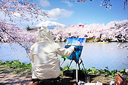 Hirosaki castle park in spring time. The artist is painting the snow covered mount Iwaki which is a volcano.Cherry blossoms adorn the banks of the moat. Hirosaki castle, located in Northern Honshu, Japan. Over 3,000 cherry trees come into bloom from mid April to early May.
