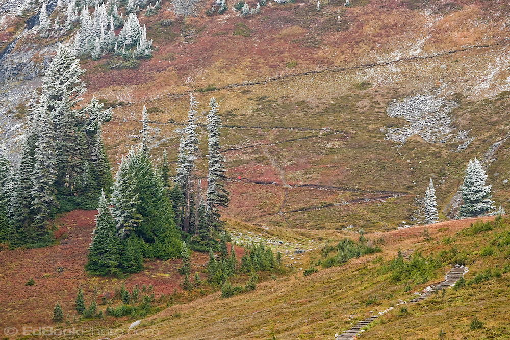 A lone hiker ascends the Golden Gate trail switchbacks, Mount Rainier NP, WA, USA