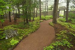 Asticou Azalea Gardens in Northeast Harbor, Maine.  Near Acadia National Park on Mt. Desert Island.