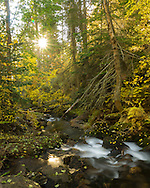 There were amazing fall colors at Bass Creek on this morning. It was made even more colorful when the early morning sun peeked through the trees.