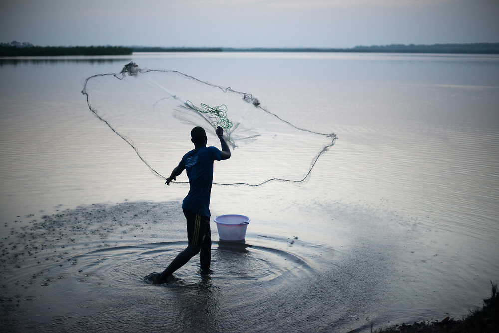A fisherman casts his net at sunrise in the mangroves of Guinea Bissau. The mangrove wetlands of Guinea Bissau and southern Senegal are the most important in all of Africa. Drought and rising sea levels due to global warming and climate change as well as human activity are causing the salinization and destruction of the delicate ecosystem with adverse affects on the unique fauna, flora and traditional livelihoods of the region's inhabitants. Canchungo, Guinea Bissau. 16/11/2014.