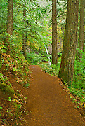 The trail to Ponytail Falls, Columbia River Gorge National Scenic Area, Oregon