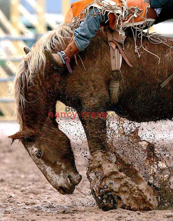 D.V. Fennell riding Robin Dee BK in the Parada del Sol Rodeo, Scottsdale, Arizona on February 12, 2005.<br /> Photo &copy; Nancy Crase.602 558-1829..