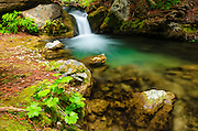 Cascade on Hare Creek, Limekiln State Park, Big Sur, California USA