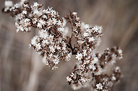 Plant in a woodland setting with white petals and feathery blooms