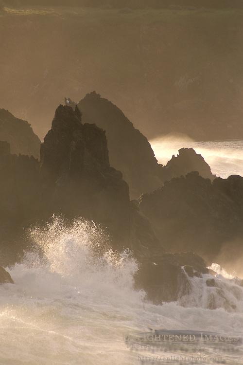 Jagged coastal rocks and seagull at sunrise, Stillwater Cove Regional Park, Sonoma Coast, California