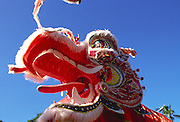 Lion Dance, Hawaii<br />